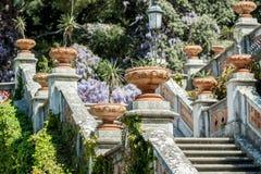Королевская лестница в глицинии замка зацветая Стоковые Фотографии RF