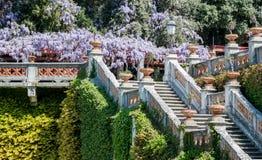 Королевская лестница в глицинии замка зацветая Стоковые Изображения