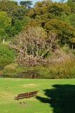 Королевские ботанические сады, Мельбурн, Виктория, Австралия. Стоковые Изображения RF