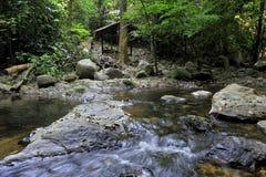 Королевский тропический лес belum Стоковая Фотография