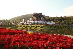 королевское chiangmai флоры Стоковые Изображения RF