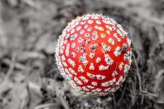 Королевство гриба. Стоковое Изображение