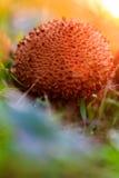 Королевство гриба Стоковое Фото