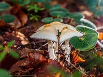 Королевство гриба Стоковое Изображение
