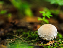 Королевство гриба Стоковые Фото