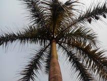 Король кокосов стоковая фотография