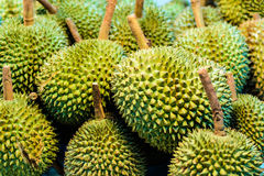 Король дуриана плодоовощ Стоковое Фото