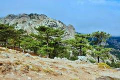 Корсик-внешний вид от Col de Bavella пропуска стоковое фото