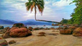 Косая пальма Стоковое Изображение RF
