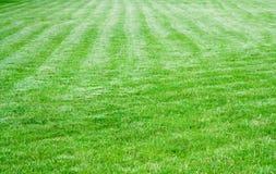 косилка зеленого цвета травы Стоковое Фото