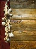 косичка чеснока Стоковые Изображения
