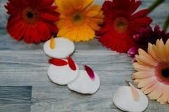 Косметика и цветок ванны курорта, на белой предпосылке Стоковые Фото