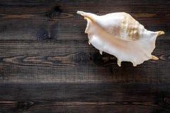 Косметики и раковина моря от мертвого моря для насмешки взгляд сверху предпосылки домодельного курорта деревянной вверх Стоковая Фотография RF