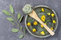 Косметические глина и цветок и ветвь евкалипта, для обработок курорта, в керамической грязи плиты на деревянной ложке на сером цв Стоковое Изображение RF