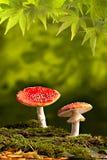 космос гриба падения экземпляра предпосылки осени одичалый Стоковое Изображение RF