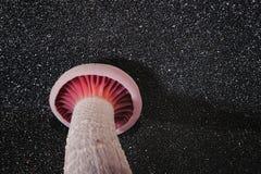 Космос гриба Стоковые Изображения RF