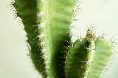Космос кактуса и экземпляра Стоковое Фото