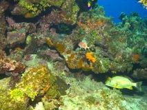 космос места рифа острова экземпляра Кеймана Стоковые Изображения