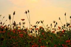 Космос предпосылки цветка лета для текстуры Стоковые Изображения