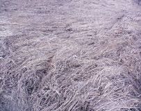 Космос сухой травы с тоном сирени стоковое изображение
