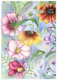 космос цветет rudbeckia Стоковое Изображение RF