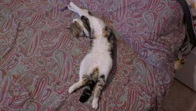 космос экземпляра кота кровати Стоковые Изображения