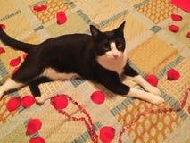 космос экземпляра кота кровати Стоковое Фото