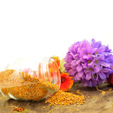 Космос экземпляра цветня пчелы Стоковое Фото