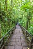 Костариканский дождевой лес Стоковое Изображение