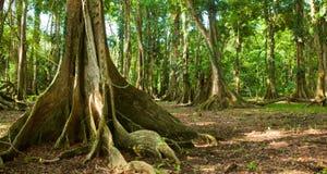 Коста-Рика Стоковые Изображения