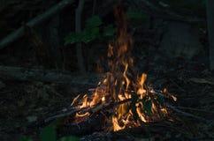 Костер в лесе Стоковые Фотографии RF