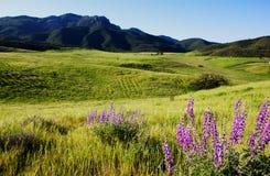 Костлявая гора стоковая фотография rf