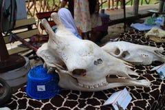 Косточка жирафа Стоковая Фотография RF