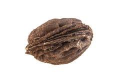 Косточка персика изолированная на белизне Стоковые Фотографии RF