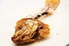 Косточка рыб Стоковая Фотография