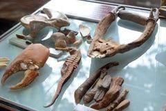 Косточки животных Стоковые Фотографии RF