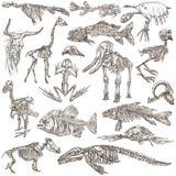 Косточки и черепа различных животных - freehands иллюстрация штока