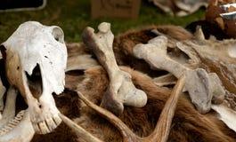 Косточки и череп животных Стоковые Изображения