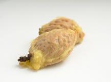 Косточки от персика на белой предпосылке Стоковая Фотография