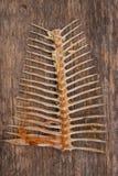 Косточки рыб на древесине стоковая фотография