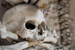 Косточки черепа Стоковая Фотография RF