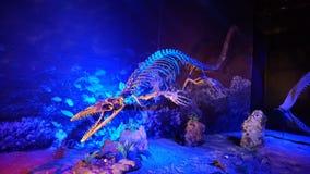 Косточки Dinosours стоковые фотографии rf