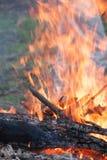 костры Деревянные журналы горят Высокое пламя стоковые фотографии rf