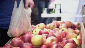 Костюмируйте выбор красных яблок в рынке фрукта и овоща города Покупатель комплектуя красные сочные яблоки в рынке фермеров видеоматериал
