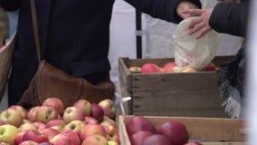 Костюмируйте выбор красных яблок в рынке фрукта и овоща города Покупатель комплектуя красные сочные яблоки в рынке фермеров сток-видео
