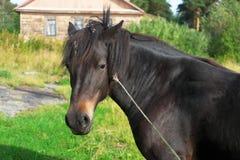 Костюм лошади коричневый Стоковое Изображение RF