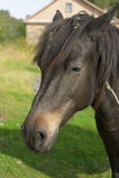 Костюм лошади коричневый Стоковые Изображения RF