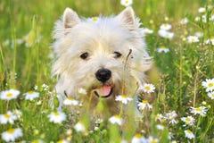 Костлявый портрет собаки стоковые фото