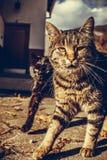 2 кота вытаращить на камере стоковые фотографии rf