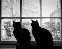 2 кота в силуэте на окне стоковое фото